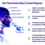 Reviews of The Top-Rated Pheromones